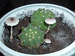 Cactus y setas